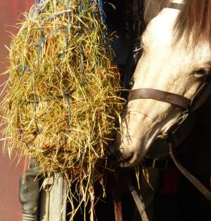 Charity Horse Ride - horse and hay